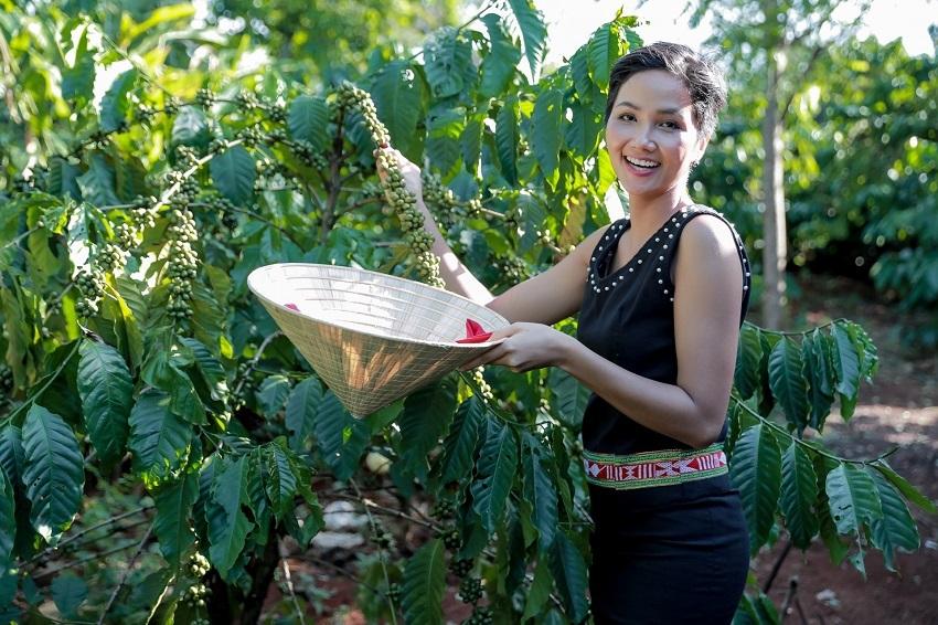 Những địa danh nào trồng các loại Cà phê ngon nhất Việt nam