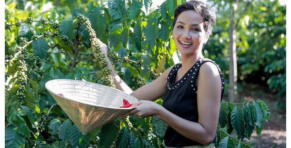 Một số loại Cà phê ngon nhất Việt nam bạn cần biết.