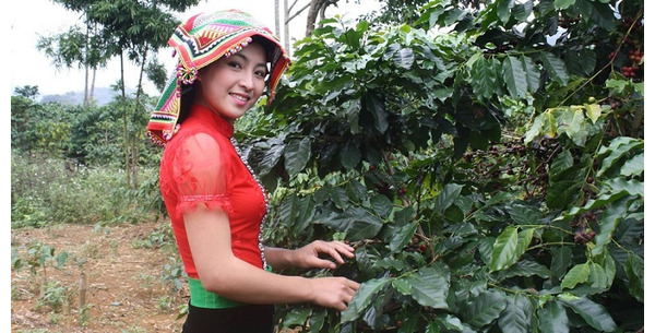 Việt Nam và 3 vùng trồng cà phê Arabica nổi tiếng nhất